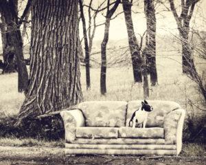 sofa doggie 8x10