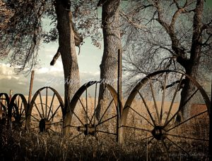 wheels m
